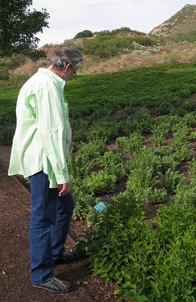 Mark Contemplating Plants In Red Butte Garden